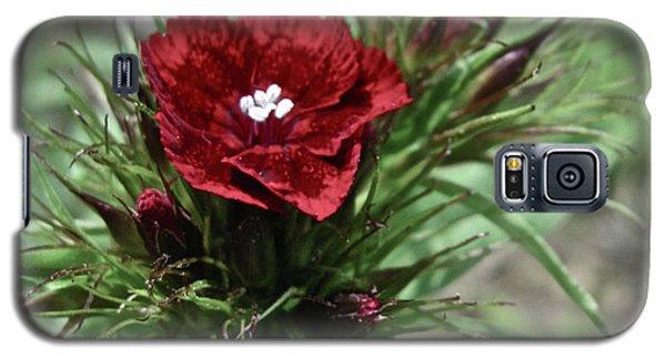 Crimson Velvet  Galaxy S5 Case