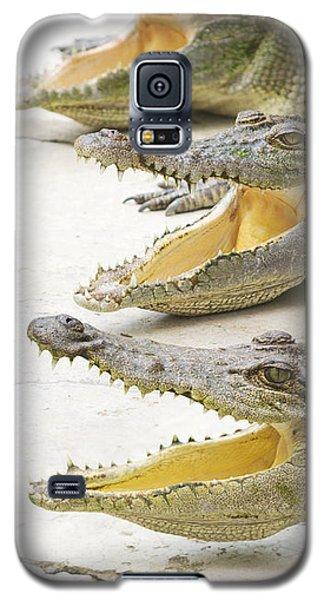 Crocodile Choir Galaxy S5 Case by Jorgo Photography - Wall Art Gallery