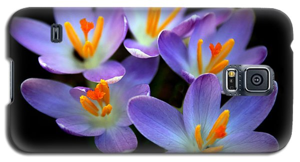 Galaxy S5 Case featuring the photograph Crocus Aglow by Jessica Jenney