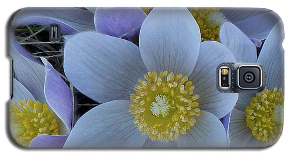 Crocus Blossoms Galaxy S5 Case