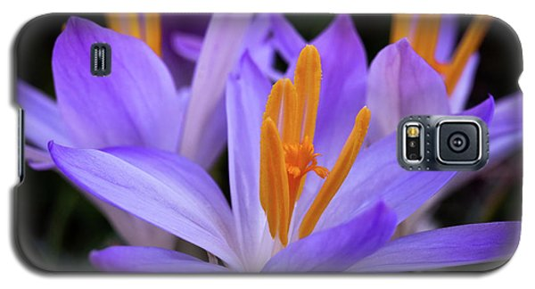 Galaxy S5 Case featuring the photograph Crocus Explosion by Douglas Stucky