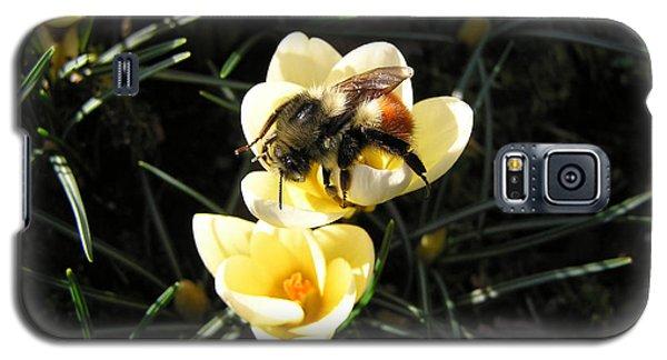 Crocus Gold Galaxy S5 Case