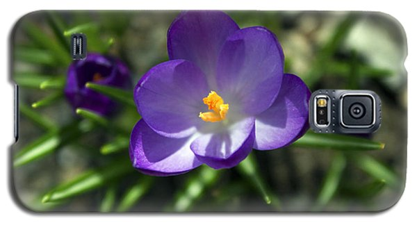 Galaxy S5 Case featuring the photograph Crocus In Bloom #1 by Jeff Severson