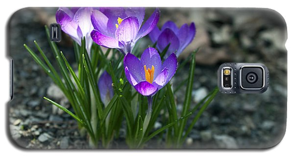 Galaxy S5 Case featuring the photograph Crocus In Bloom #2 by Jeff Severson