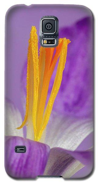 Crocus Stamens  Galaxy S5 Case