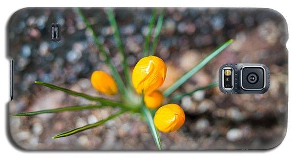 Crocus Star Galaxy S5 Case