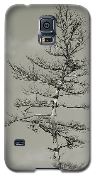 Crooked Tree Galaxy S5 Case