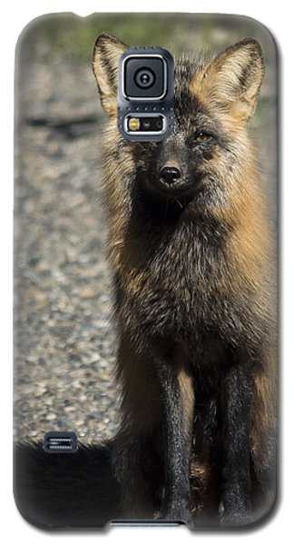 Cross-fox Wonder Galaxy S5 Case
