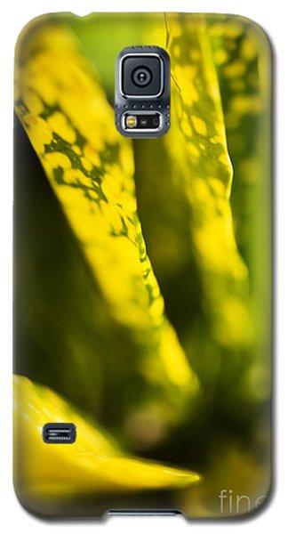 Croton Macro IIi Galaxy S5 Case
