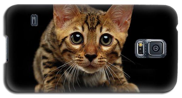 Crouching Bengal Kitty On Black  Galaxy S5 Case by Sergey Taran