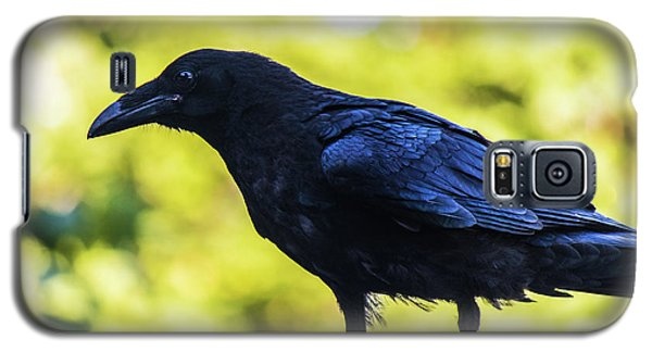 Galaxy S5 Case featuring the photograph Crow Perched by Jonny D