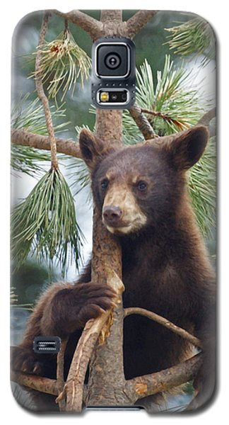 Cub In Tree Dry Brushed Galaxy S5 Case