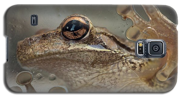 Cuban Treefrog Galaxy S5 Case