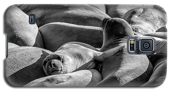 Cuddle Puddle Galaxy S5 Case
