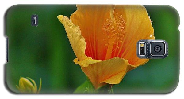 Cup Of Honey Galaxy S5 Case