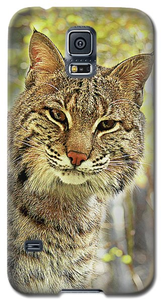 Galaxy S5 Case featuring the photograph Curiosity The Bobcat by Jessica Brawley