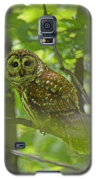 Curious Barred Owl Galaxy S5 Case by Alan Lenk