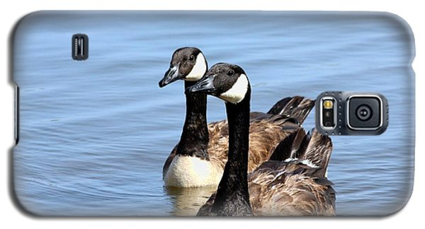 Curious Canda Geese Galaxy S5 Case by Sheila Brown