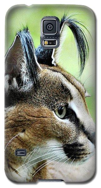 Curious Caracal Galaxy S5 Case