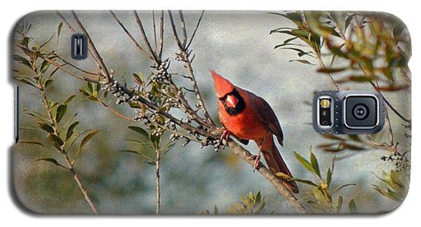 Curious Cardinal Galaxy S5 Case