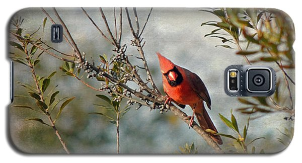 Curious Cardinal Galaxy S5 Case
