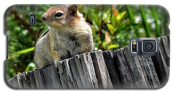 Curious Chipmunk Galaxy S5 Case by AJ Schibig