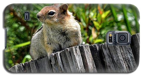 Curious Chipmunk Galaxy S5 Case