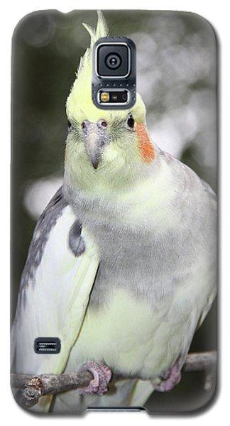 Curious Cockatiel Galaxy S5 Case