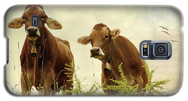Curious Cows Galaxy S5 Case