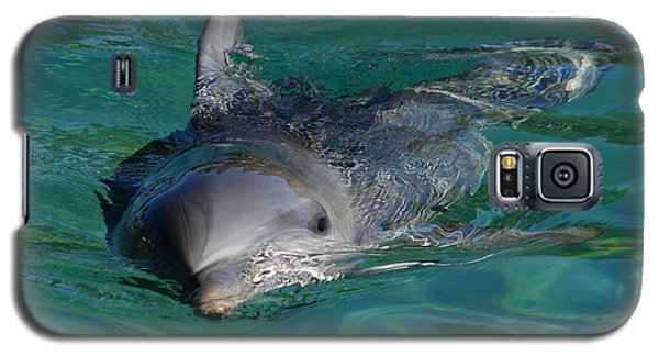 Curious Dolphin Galaxy S5 Case