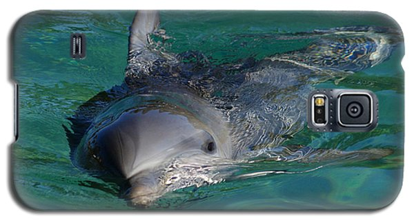 Curious Dolphin Galaxy S5 Case