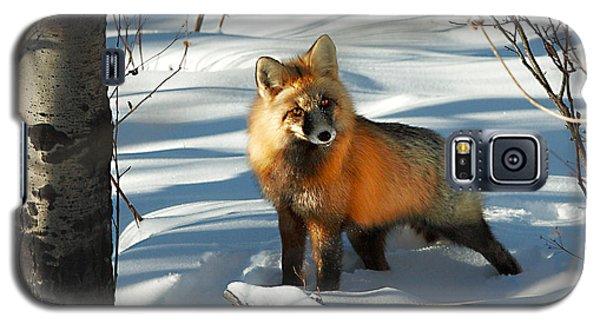 Curious Fox Galaxy S5 Case
