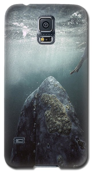 Curious Gray Whale And Tourist Galaxy S5 Case
