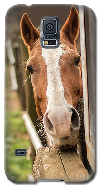 Curious Horse Galaxy S5 Case