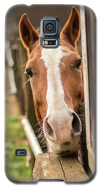 Curious Horse Galaxy S5 Case