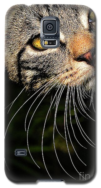 Curious Kitten Galaxy S5 Case