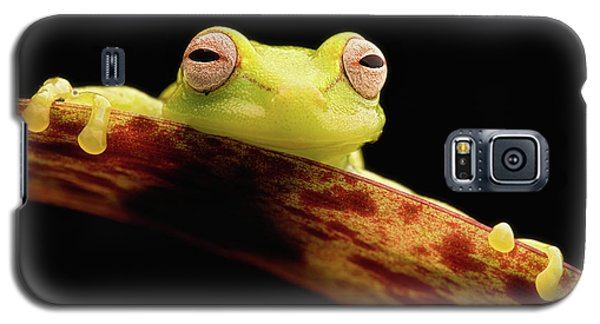 Curious Little Amazonian Tree Frog Galaxy S5 Case by Dirk Ercken