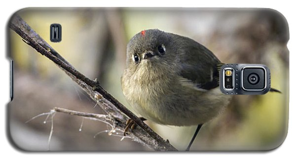 Curious Ruby-crowned Kinglet Galaxy S5 Case