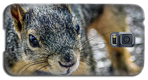 Galaxy S5 Case featuring the photograph Curious Squirrel by Joann Copeland-Paul
