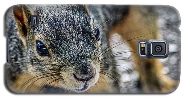 Curious Squirrel Galaxy S5 Case