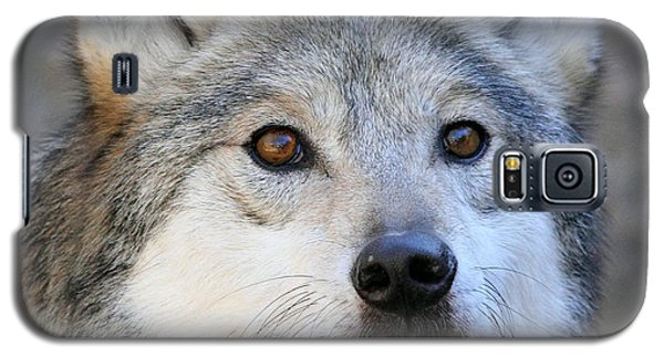 Curious Wolf Galaxy S5 Case by Elaine Malott