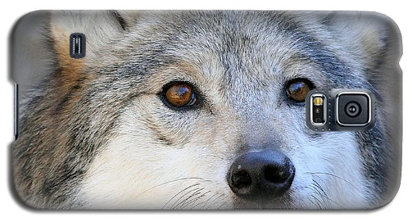 Curious Wolf Galaxy S5 Case