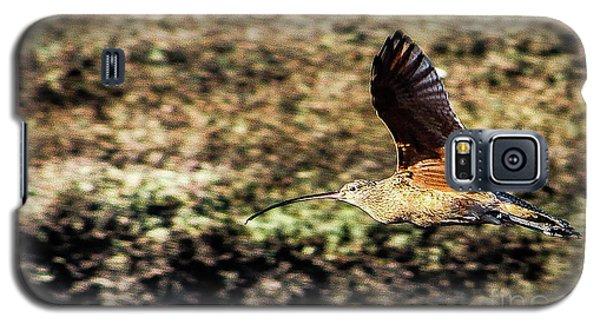 Curlew In Flight Galaxy S5 Case