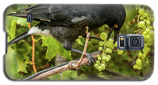 Currawong On A Vine Galaxy S5 Case
