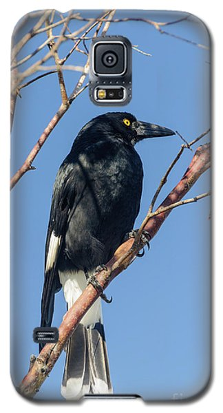 Currawong Galaxy S5 Case by Werner Padarin