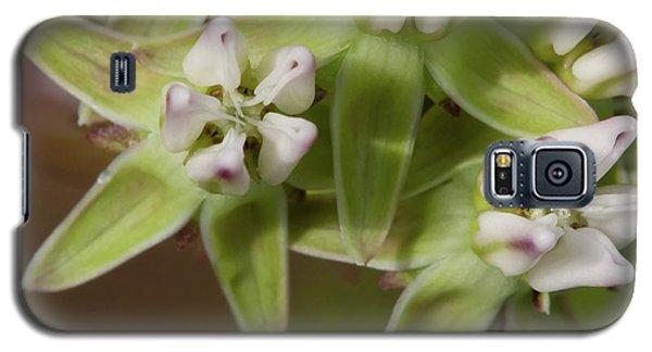 Curtiss' Milkweed #4 Galaxy S5 Case