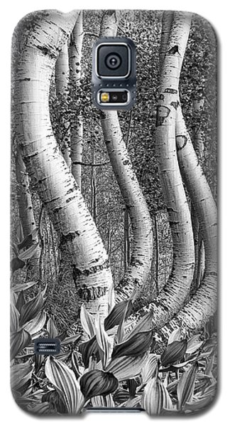 Curved Aspens Galaxy S5 Case