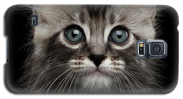 Cute American Curl Kitten With Twisted Ears Isolated Black Background Galaxy S5 Case by Sergey Taran