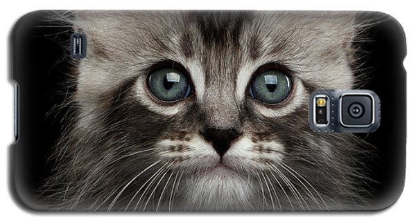 Cute American Curl Kitten With Twisted Ears Isolated Black Background Galaxy S5 Case