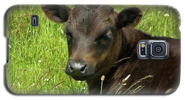 Cute Cow Galaxy S5 Case by Terri Waters